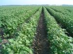 crops (01328212x9F897)